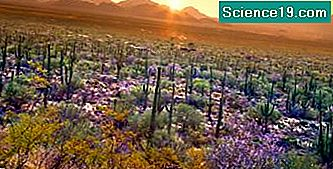 Desert Ecosystems for Kids