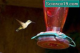 Hvordan lage Hummingbird Food for Feeders