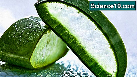 Aloe Vera Science Experiments