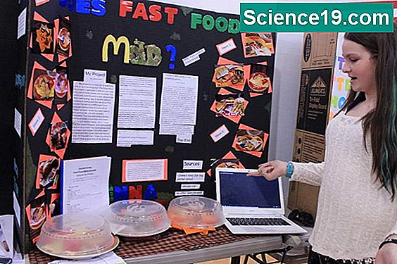 Middle School Science Fair Projekte mit Hunden