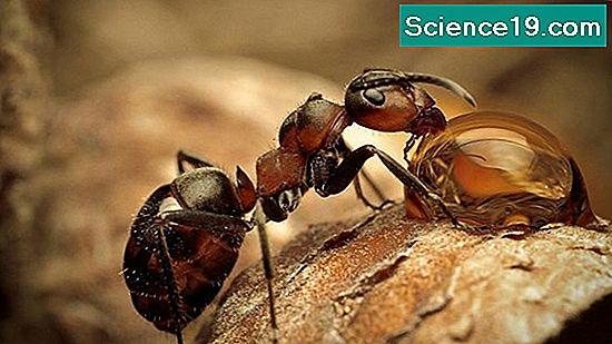 Arañas venenosas nativas de Illinois 💫 Portal Multimedia Científica ...